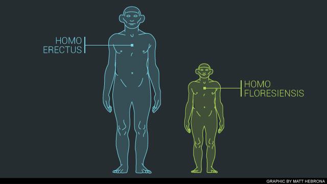 homo-floresiensis-20130417